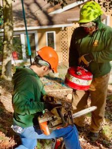 tree care in candler nc
