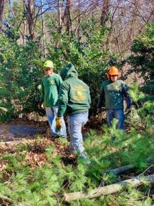 land clearing clearing cleanups candler nc